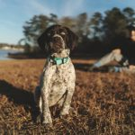 How to Train Your Dog to Be a Therapy Dog for Anxiety