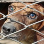 Pet Pardon app will enable animal lovers to share to save a life
