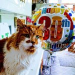 30 year old cat may be the oldest living domestic cat