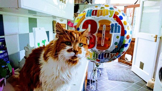 30 year old cat