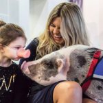 LiLou the Therapy Pig at the Airport Brings Smiles