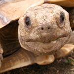 Five Reasons to Not Buy Turtles or Tortoises As Gifts