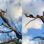 Firefighters save a DOG stuck in a tree-after chasing a cat