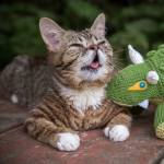 Memories of Lil Bub