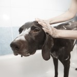 World Pet Association to Unveil Pet Grooming Credential