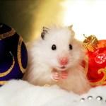 Have a Hammy Christmas!