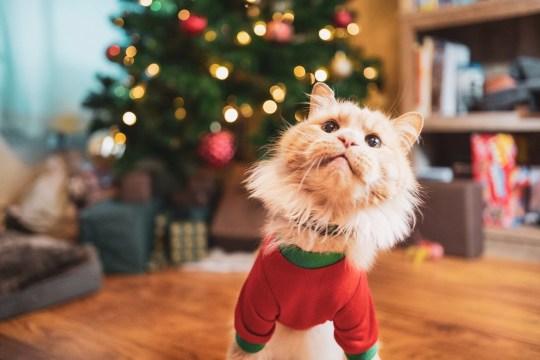 Aslan the Wobbly Cat