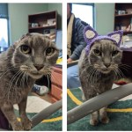 Stray Cat with No Ears Gets a Knit Hat that is Just Adorable