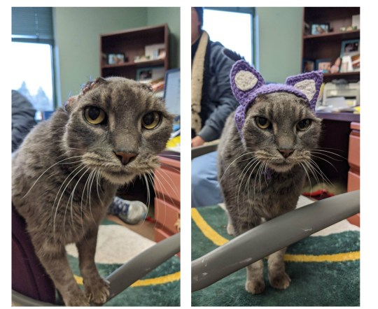 Cat with no ears gets knitted ear hat