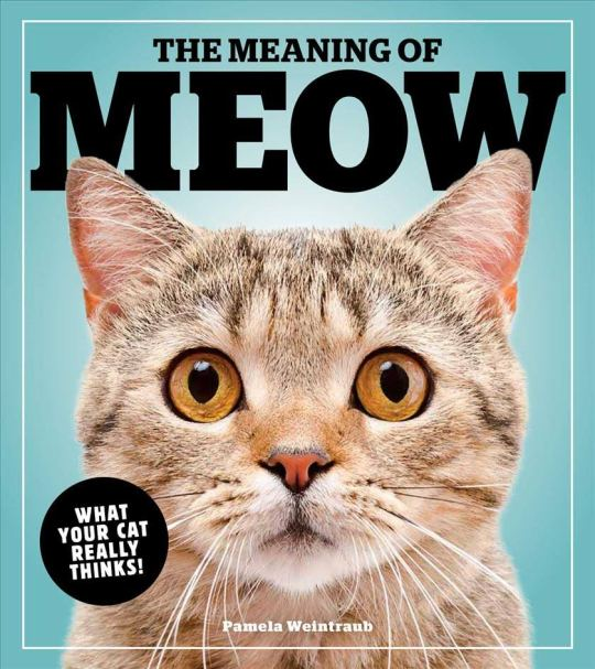 The Meaning of Meow Book Cover