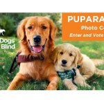 Guide Dogs For The Blind Sponsors Puparazzi Photo Contest