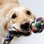 Indoor Games to Play with Your Dog