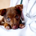 6 Reasons Why You Should Consider Insurance For Your Pet