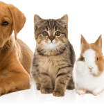 $55 Billion Pet Products Market Is Proving Recession-Defiant