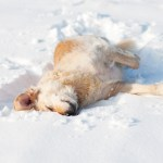 How to Protect Your Dog From Frigid Cold