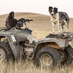 Make an ATV Dog-Friendly