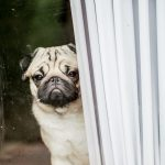 Dogs Have Anxiety Too! How can humans help?
