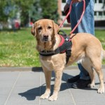 Anxiety Answers: Can You Get a Service Dog for Anxiety?