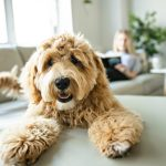 Canine Diabetes: Risk Factors & Symptoms