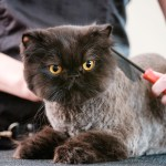 4 Common Cat Grooming Mistakes and How to Avoid Them