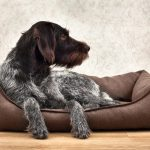 How To Choose The Right Dog Bed According To Breed