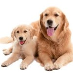 Common Health Problems Found In Dogs: How To Tackle Them