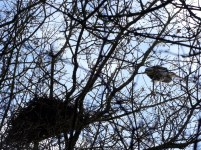 Have you ever seen a stork nest in a tree? I didn't, as in Romania they are using the electrical pillars.