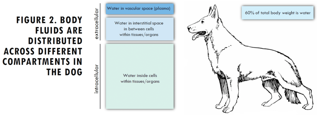 Figure describing how body fluids are distributed across different compartments in the dog