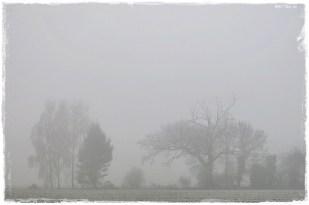 21-Januar den ganzen Tag nebelig!