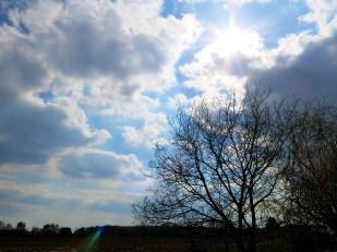 18-April unser Walnußbaum