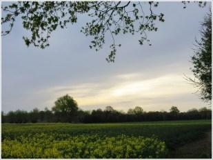 23-April Hunderunde (Richtung Lagenberg)