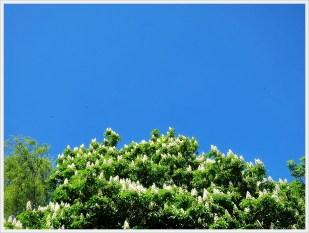 9-Mai schönes Wetter - unsere große Kastanie