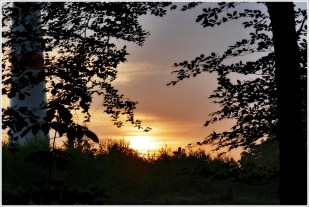 21-Juli früh im Bergeler Wald
