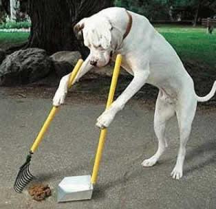 10 dicas arrasadoras para ensinar seu cachorro a fazer xixi e cocô no lugar certo