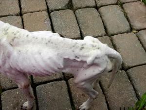 Dino the Burlington County dog