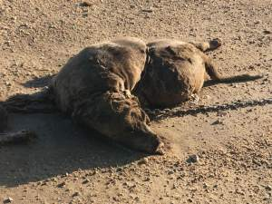 Lucerne Dog deaths 2