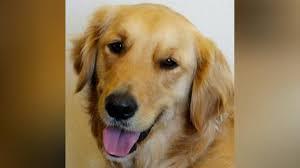 comfort dog 2 shot