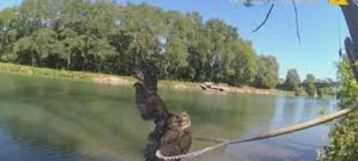 rescued-owl-cover-odgen-police