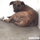 heartbroken and hopeless dog