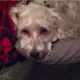Dog dies after eating toxic mushroom