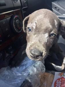 texas-puppy-5