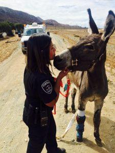 fontana-police-depart-burro-3