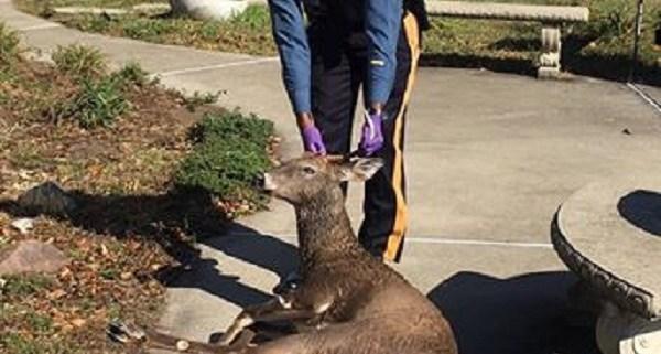 Trooper rescues drowning deer