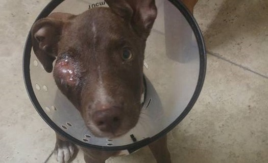 Horribly injured puppy