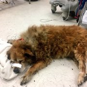 Dog protected owner in fire