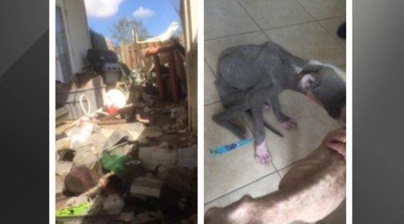 hurricane-matthew-starving-dog