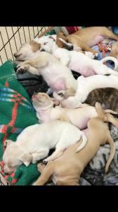 ten-puppies-3