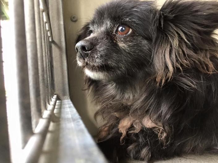 Terrified senior dog