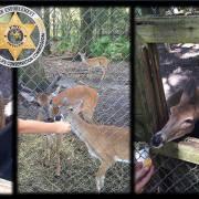 Three deer killed