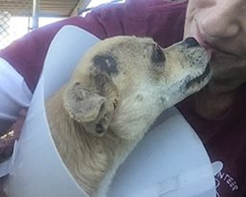 Dog who survived house fire is now homeless